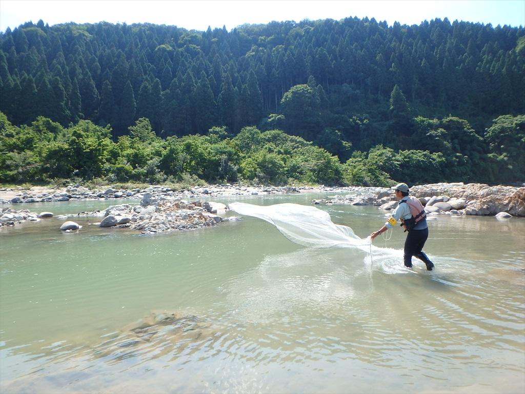 手取川・梯川水辺現地調査(魚類・陸上昆虫類等)外業務