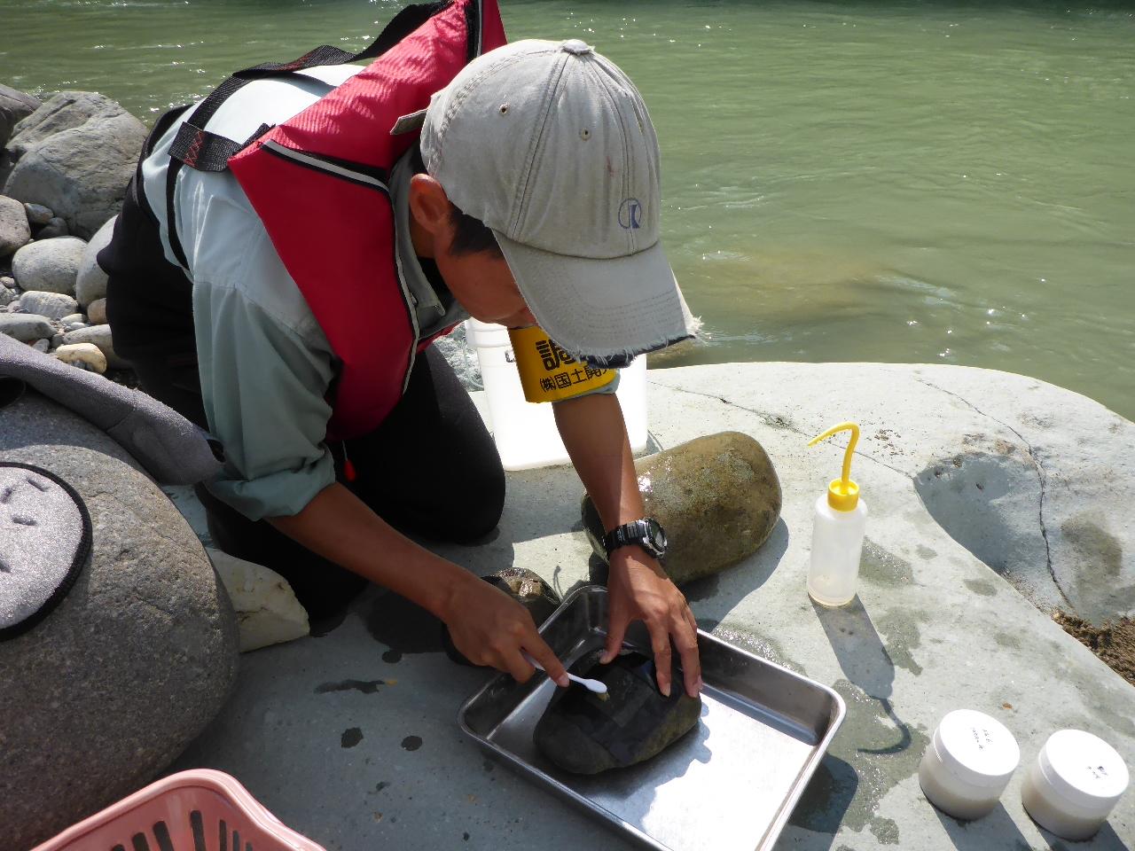 手取川における礫河原の復元について