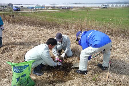 河北潟植樹、除草作業